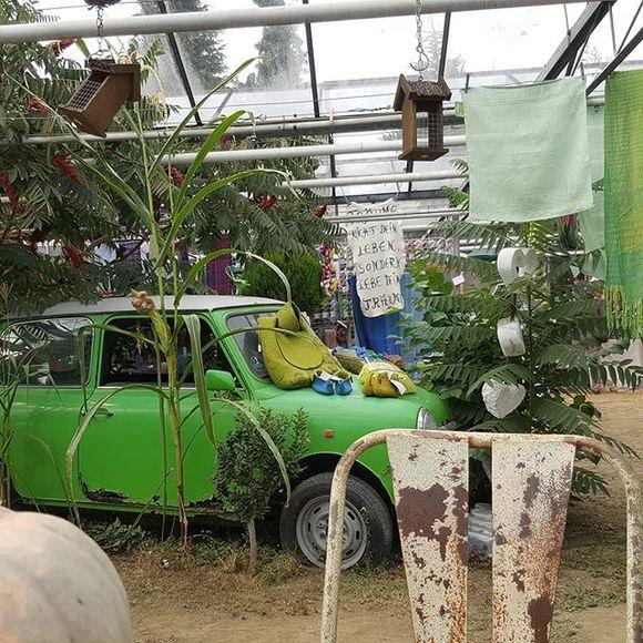 Das bunte Schaf - Wollmarkt im Treibhaus