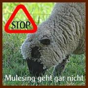 Stop Mulesing